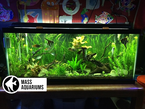 Have a Freshwater Aquarium in Your Living Room
